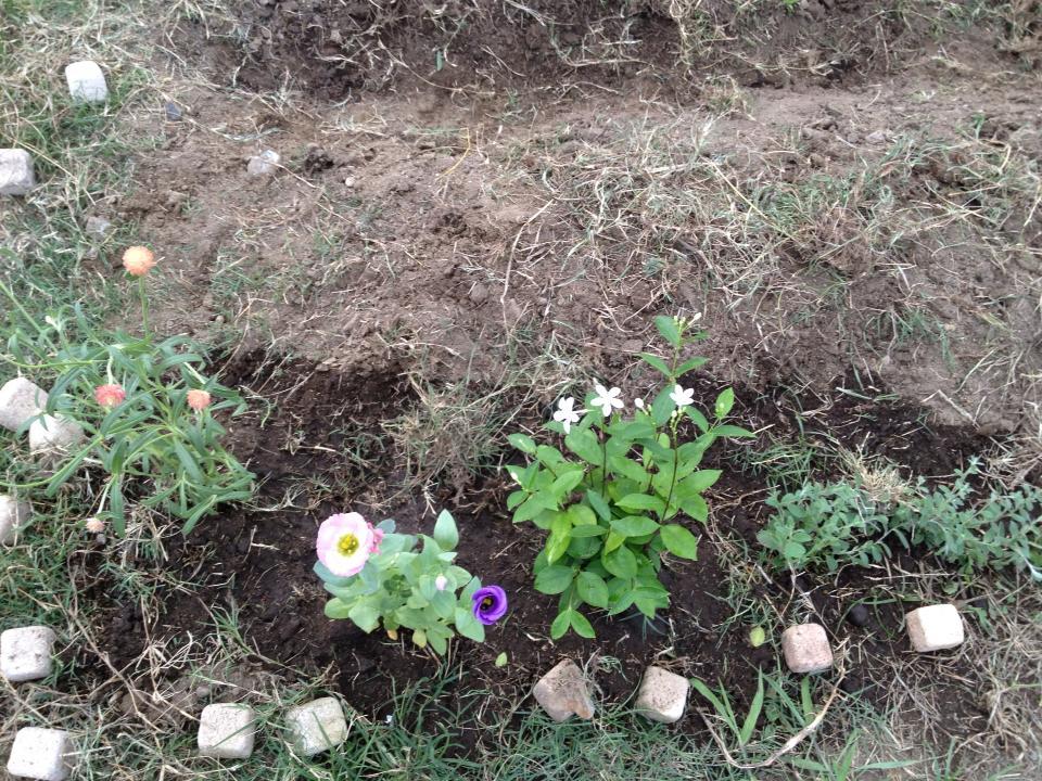 畑の際の花
