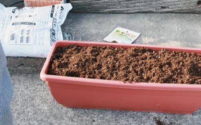 朝顔の種まき 土台作り